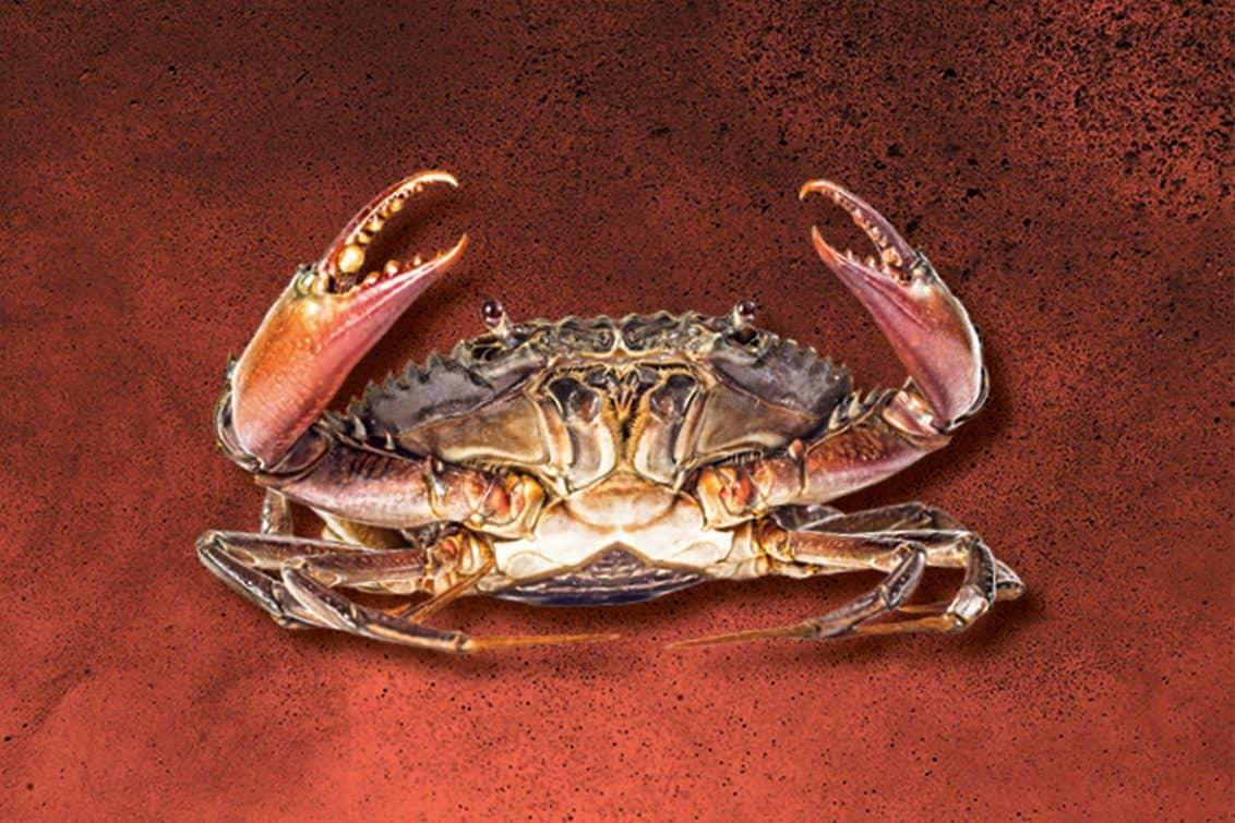 RP243-fb-crabs-11-1132x755