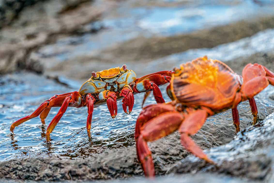 RP243-fb-crabs-aufmacher-1132x755